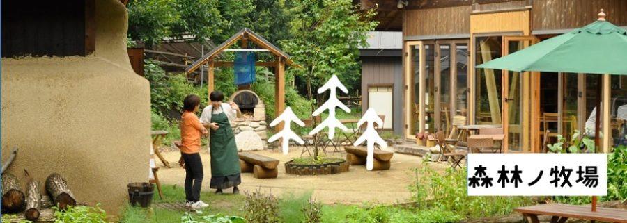 森林ノ牧場(ジャージー牛乳)搾るヨーグルト 旅サラダ(コレうま)