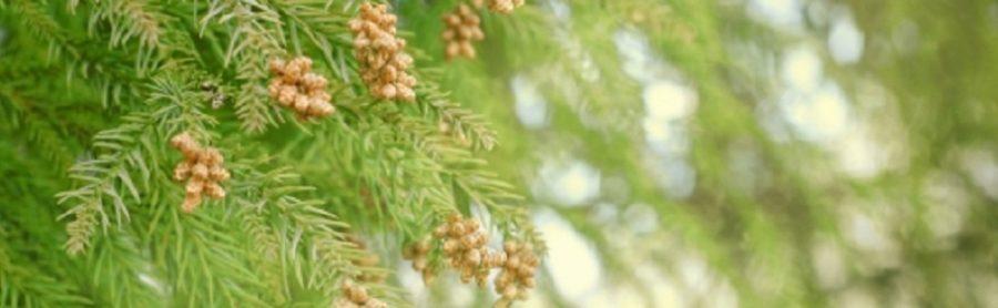 最新の花粉対策グッズ・マスク 2019年 今年の花粉は多い?
