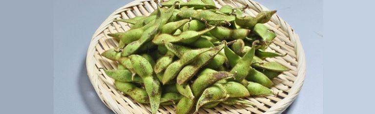 丹波黒大豆の枝豆です。47クラブ 予約・お取り寄せ
